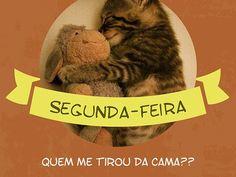 Quem foi que fez meu despertador tocar? Não quero sair da cama quentinha! #segunda #sono #gatos #animais