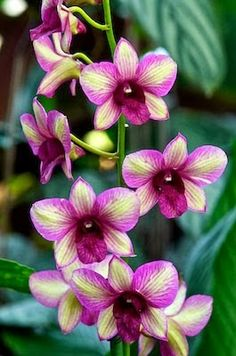 Randam Color Orchid Posted by : Muhammad Khalid Wednesday, 15 January 2014 Back to Home » Flowers » Randam Color Orc...
