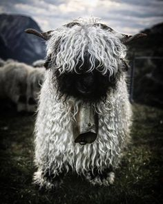 """hughhighlander: """" via valais wallis fb. hugh highlander """""""