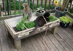DIY Cat Table...patch of grass in catnip garden!