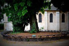 The Story of the Oldest Tree in Paris - planted 1601, quai de Montebello