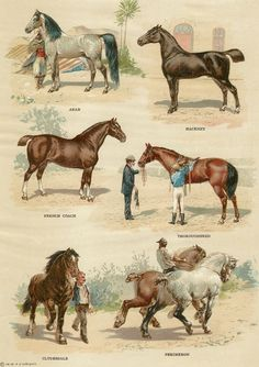 1919 Illustrations of Horses found in The Book of Knowledge from a Horses Ephemera Grab Bag.  (Horses Ephemera Grab Bags available at http://www.uncannyartist.com/products/horses-ephemera)