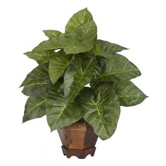 Taro w/Vase Silk Plant - Aloha! Perfect for the boardroom or your next luau, these Polynesian plants look great in any setting. The rich green leaves of the Taro plant cascade freely over each other to create a multi-layered presentation that is like no other. To add to that island charm is a fun hexagonal style vase that really brings out the lushness of this island wonder. Number of Trunks: NA Number of Flowers: NA Number of Leaves: NA Pot Size: W: 6.5 in, H: 5.75 in Color: Green Product…