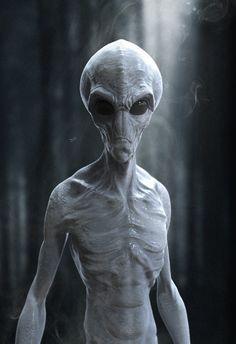 Alien Illuminati Anunnaki New World Order Agenda Aliens UFO Extraterrestrial AlienAncient Aliens ET Seti E. Alien Gris, Grey Alien, Aliens Und Ufos, Ancient Aliens, Ancient History, European History, American History, Alien Tattoo, Alien Creatures