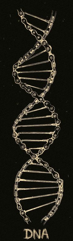 The hard coded DNA that links all cyclists. Cycling T Shirts, Cycling Art, Road Cycling, Cycling Clothing, Cycling Tattoo, Tatoo Bike, Bike Tattoos, Tattoo Examples, Bike Drawing