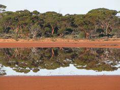 Dundas, Australia by psstevo. #TPbest