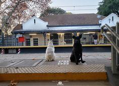 Estación ferroviaria Ranelagh seguimos en cuarentena utilizando el servicio ferroviario solo para los trabajos esenciales los perros guardianes de un presente donde nos quedamos en casa Animals, Gift, Home, Parking Lot, Buenos Aires, Parks, Dogs, Animales, Animaux