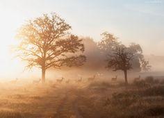 Sarny, Mgła, Wschód Słońca