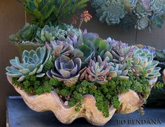 I have posted photos over the last couple of months of succulents in large faux clams but this one by far is my favorite...don't you agree? Succulent arrangement by Roger's Garden.  Photo by Bo Bendana