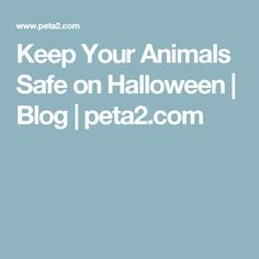 Keep Your Animals Safe on Halloween | Blog | peta2.com