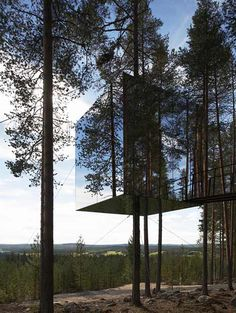 A mirrored glass box suspended round the trunk of a tree in Harads, northern Sweden