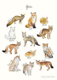 A chart featuring the Blanford's fox, Red fox, Fennec fox, Arctic fox. Animal Drawings, Art Drawings, Animal Illustrations, Vogel Illustration, Fox Art, Cute Fox, Red Fox, Spirit Animal, Art Reference