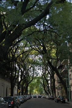 5 Amazing Benefits of Urban Trees :  The net cooling effect of single, young healthy tree is equivalent to 10 room-sized air conditioners, running for 20 hours a day. 10 air conditioners, a single tree!! A tree planted today on the west side of your house will result in a 3% energy savings in the five years time, 12% savings in fifteen years. A single stand of trees reduces particulate pollution 9-13%, with the amount of dust reaching the ground beneath those trees 27-42%, versus in an open…