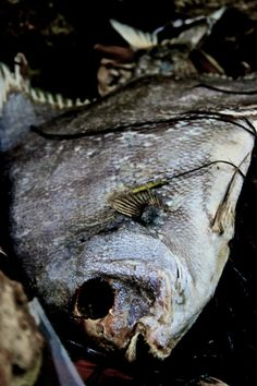 8x10 Dead Fish Photograph by misanthropyphoto on Etsy, $18.00