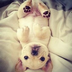5 Adorable puppies you will love to cuddle with, click the pic and see them all