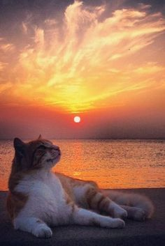 夕焼け空と猫