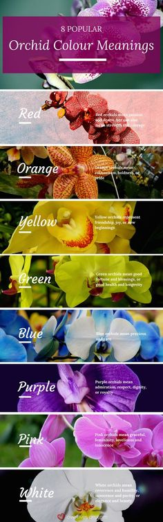 An infographic to help you bring even more meaning to your funeral arrangements by knowing 8 popular orchid colours & their meanings. Learn how to meaningfully express feelings through flowers.