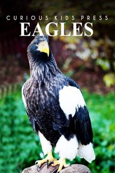 Eagles - Curious Kids Press: Kids book about animals and ...