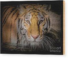 Teresa Wilson - Feline Friends - Art for Sale
