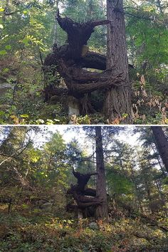 Troll looking tree growth Fast Crazy Nature Deals. Art Et Nature, Nature Tree, Creepy, Scary, Weird Trees, Tree Faces, Night Forest, Forest Light, Unique Trees