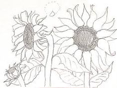 Image result for sunflower line drawings