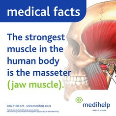 Need a medical aid? Medihelp Medical Scheme has ten plans to choose from. Medical Facts, Human Body, Did You Know, Fun Facts, Muscle, How To Plan, Funny Facts, Muscles
