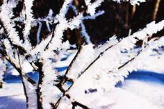 Winter. Ice. Storm. Nature. Photography. Carrie McClellan Photography. Snow.
