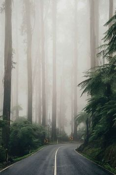 """(TRAVEL) I really like this shot of the road. Would be a nice travel shot. The angle of the road straight on with the """"mysterious"""" turn at the end leads your eyes into the photo. Beautiful World, Beautiful Places, Beautiful Pictures, Landscape Photography, Nature Photography, Travel Photography, Film Photography, Photography Ideas, Theme Nature"""