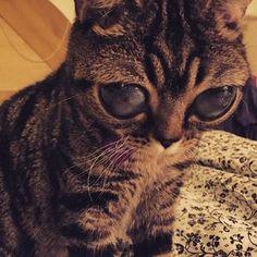 Matilda, la chatte aux yeux extraterrestres, a besoin de vous !