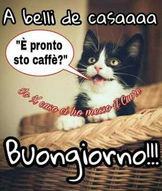 Cats And Kittens Quotes Mornings 61 Ideas For 2019 Good Morning Quotes For Him, Good Morning Good Night, Funny Cat Memes, Funny Cats, Cat Eye Tutorial, Kitten Quotes, Italian Memes, Super Cat, Cat Room