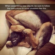 Here's a good tip for new owners of a dog kit! Put it together correctly... #funny #dogs