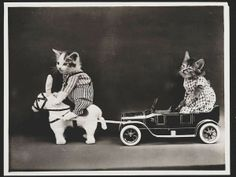 Gatitos y perritos posando (© Harry Whittier Frees/United States Library of Congress)
