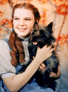 Toto , cane, Il meraviglioso mago di Oz, The Wonderful Wizard of Oz, protagonista film, serie televisive, dog, starring film , TV series , FILM,