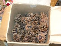 cleaning pinecones for crafts