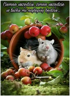 Happy Friday Hamsters in cup with apples Hamsters, Rodents, Animals And Pets, Baby Animals, Funny Animals, Cute Animals, Cute Creatures, Beautiful Creatures, Animals Beautiful