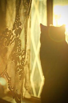 lace. sun flare. cat. love.  By Lizzy Gadd.