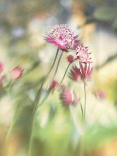 Lensbaby Erfahrungen - Glücksmomente Andrea Lück