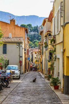 Cat in Cassis in the French Provence http://www.traveling-cats.com/2014/11/cat-from-cassis-france.html