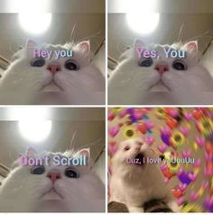 Wholesome Pics and Memes That Made Us Smile Cute Cat Memes, Cute Love Memes, Funny Animal Memes, Cute Emoji Wallpaper, Cute Disney Wallpaper, Funny Cat Compilation, Cute Words, Cat Aesthetic, Cartoon Jokes