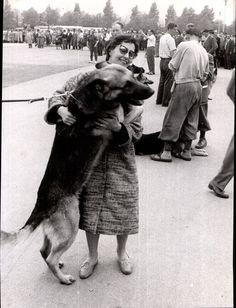 Dortmund, Schäferhund mit Frauchen bei Hundeschau 1956  / Original-Pressefoto