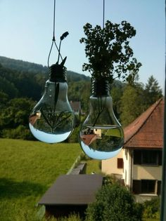 i wonder if these would deter flies too