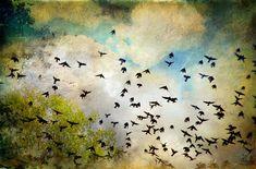 jamie heiden artist | Fine Art Photography by Cheryl Tarrant