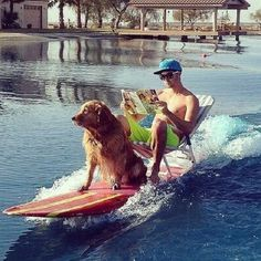 How To Take The Dog Out #Surfers Style! http://techmash.co.uk/2014/05/08/how-to-take-the-dog-out-surfers-style/