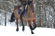 Jak poprawić ruch konia - część 2, czyli kłus (i galop)