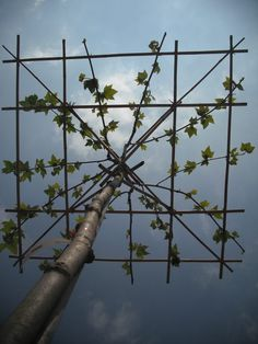 Dachshölze in the form of a roof provide a great sun protection in the garden – here in Fri … - Modern Espalier Fruit Trees, Trees To Plant, Creative Landscape, Landscape Design, Back Gardens, Outdoor Gardens, Baumgarten, Deciduous Trees, Garden Trellis