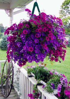 Donald Hanson Gardener's Flower Pouch Pack) Plus 2 Free Mini Pouches Container Flowers, Flower Planters, Container Plants, Container Gardening, Flower Pots, Hanging Basket Garden, Hanging Plants Outdoor, Plants For Hanging Baskets, Garden Yard Ideas