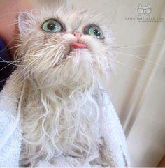 Cat bath wahahHHHhaha
