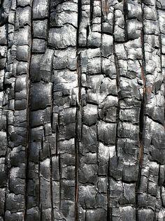 ●charred wood