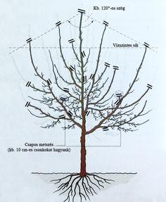 A szilvafa fenntartó metszése Garden Works, Easy Garden, Vegetable Garden, Garden Plants, Orchidaceae, Botanical Prints, Wind Turbine, Herbs, Backyard