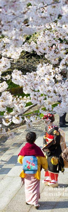 Japan Cherry blossom Flowers Garden Love
